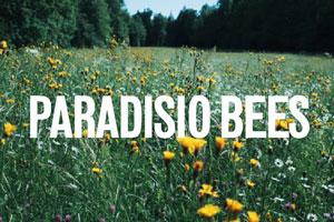 Paradisio Bees